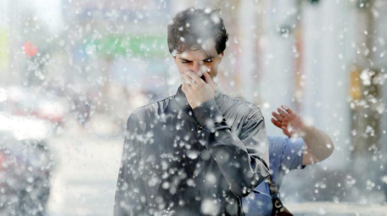 Аллергия на тополиный пух — жара июнь…