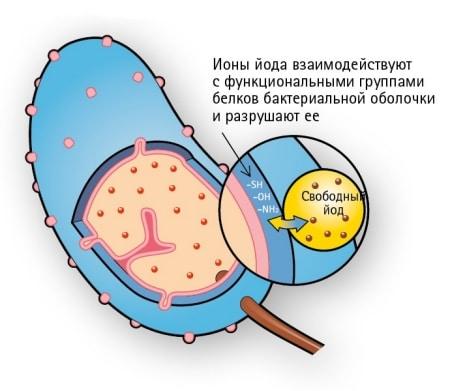 Механизм действия ионов йода на клеточную мембрану микроорганизма