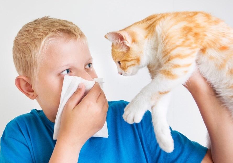 Стадии аллергии