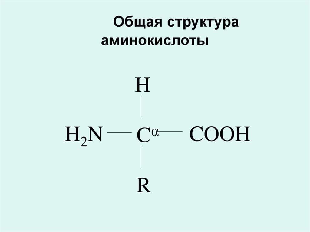 Общая структура аминокислоты