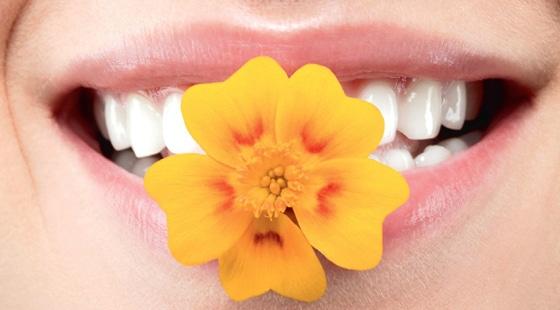 народная медицина при запахе изо рта