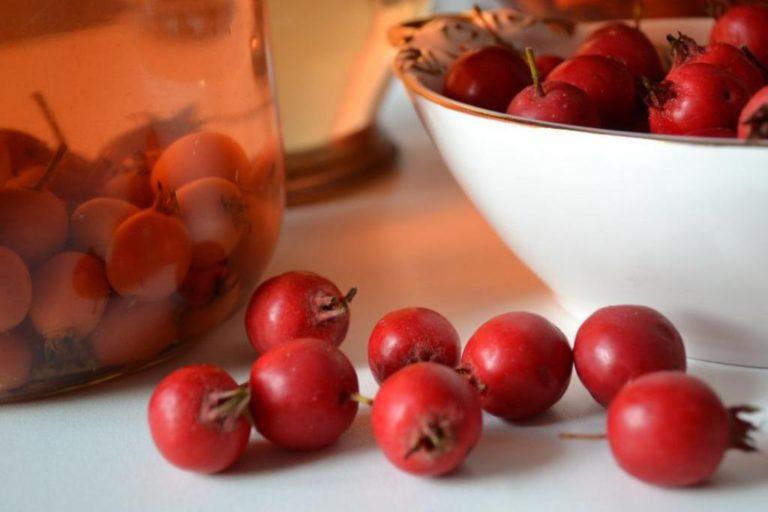 Лекарства из боярышника: отвар, спиртовая настойка, лечебные рецепты