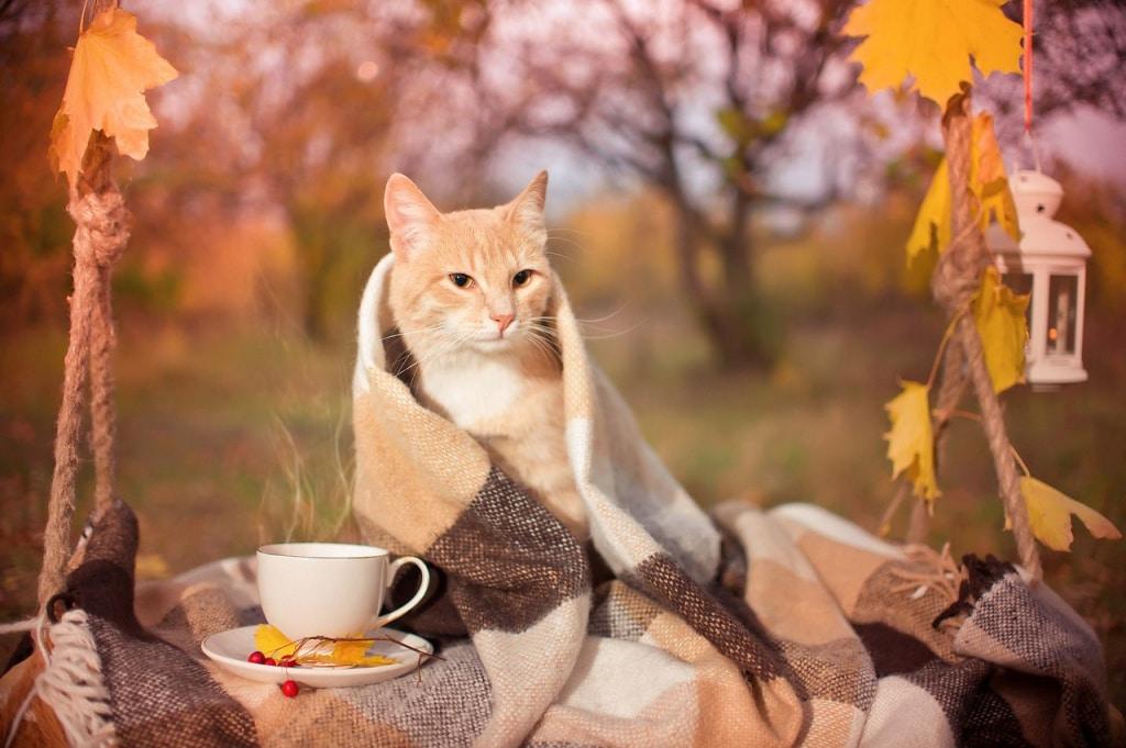 Как снизить риск простудных заболеваний в осеннее время
