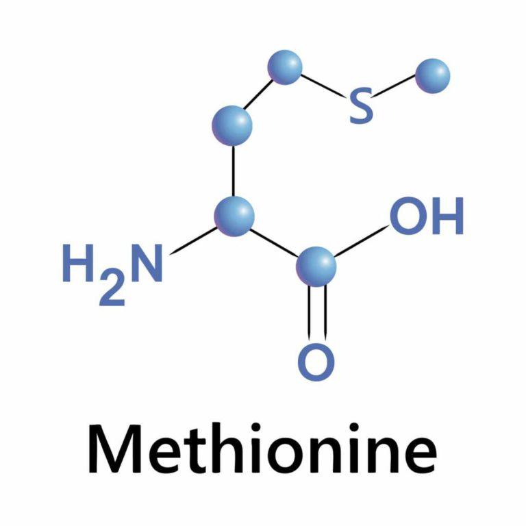 Что такое Метионин