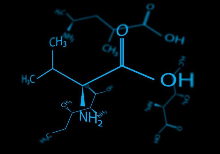 Незаменимые аминокислоты: список, роль в организме и содержание в продуктах