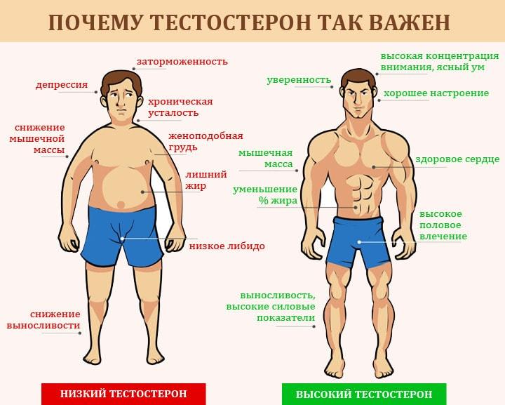 На что влияет тестостерон у мужчин