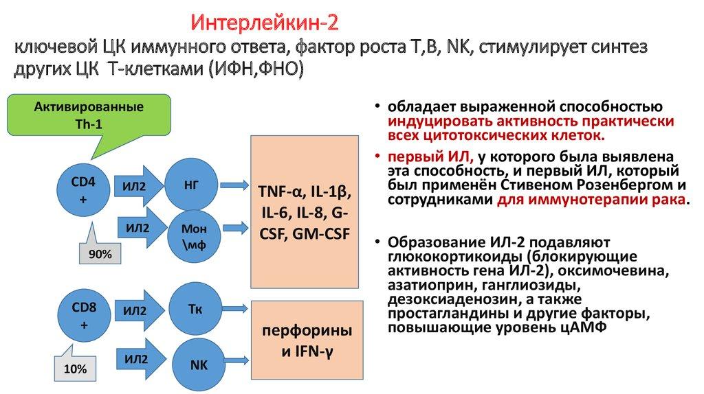 интерлейкин-2.jpg
