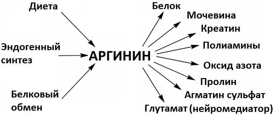 Получение Агматина сульфата
