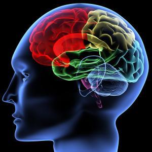 Влияние спорта на мозг