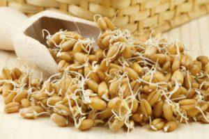 Пророщенные зерна пшеницы: польза и вред, как употреблять