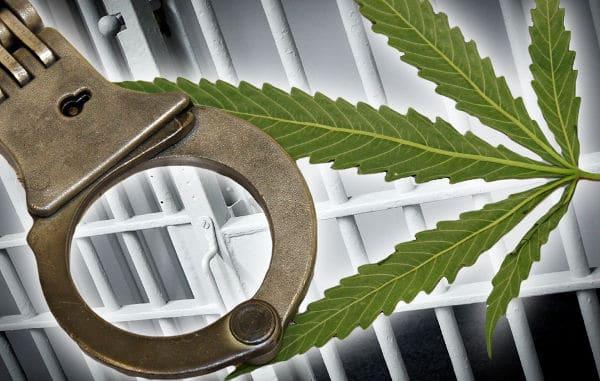 Введена уголовная ответственность за нарушение правил выращивания и разведения наркотических и психотропных растений для лечебных целей