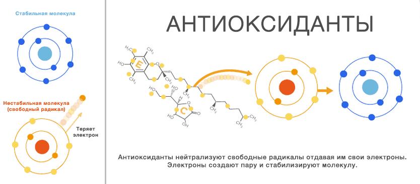 Механизм действияантиоксидантов
