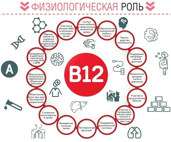 Для чего нужен организму витамин B12