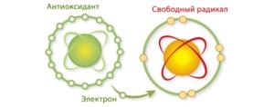 Антиоксиданты: действие, для чего нужны, применение, содержание в продуктах и препараты