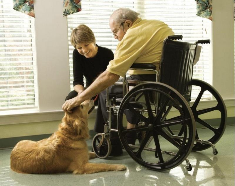 домашние животные побеждают боль человека