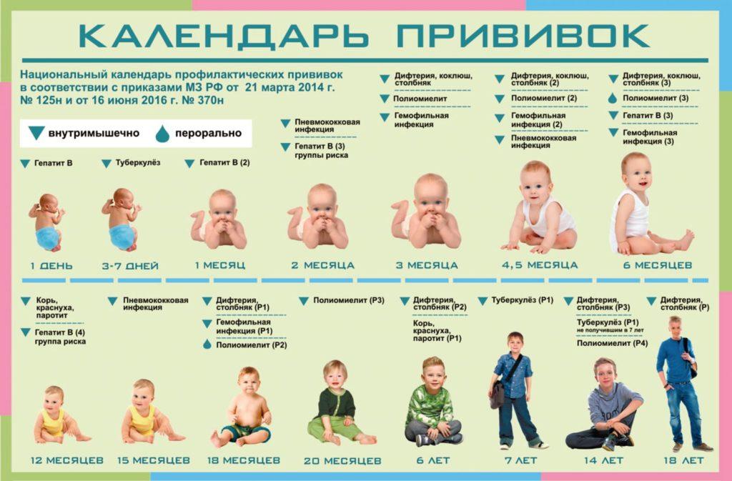 Прививка АКДС график вакцинации