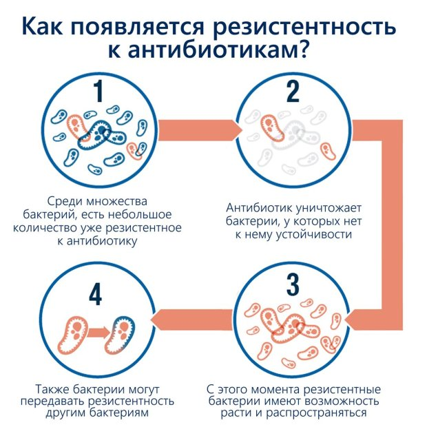 Резистентность бактерий к антибиотикам