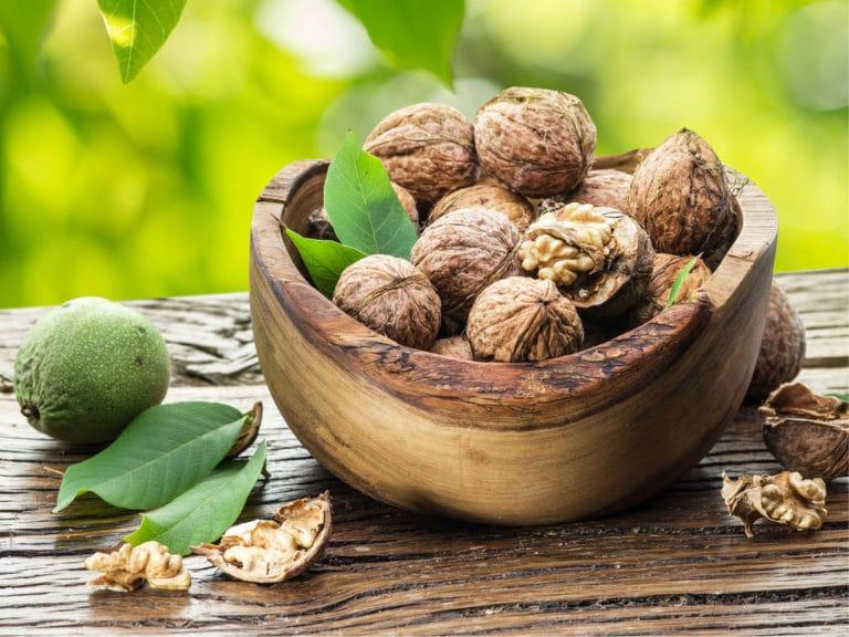 Польза грецкого ореха для организма человека