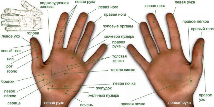 Биологически активные точки рук