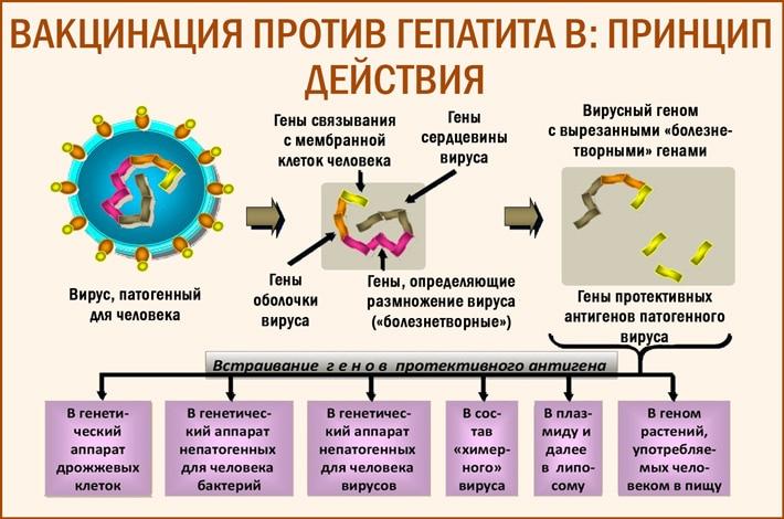 Вакцинации против гепатита