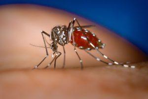 Запасайтесь репеллентами: комары из Африки в России