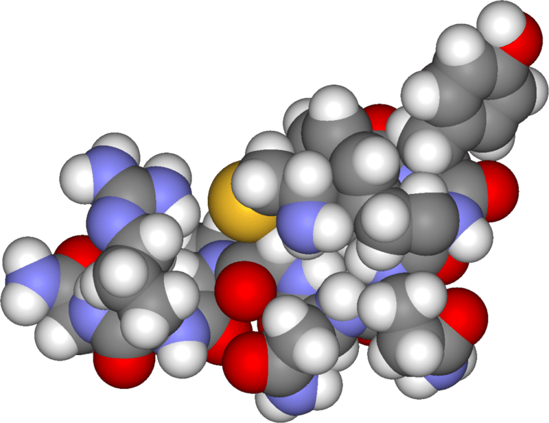 Модель аргинин-вазопрессина