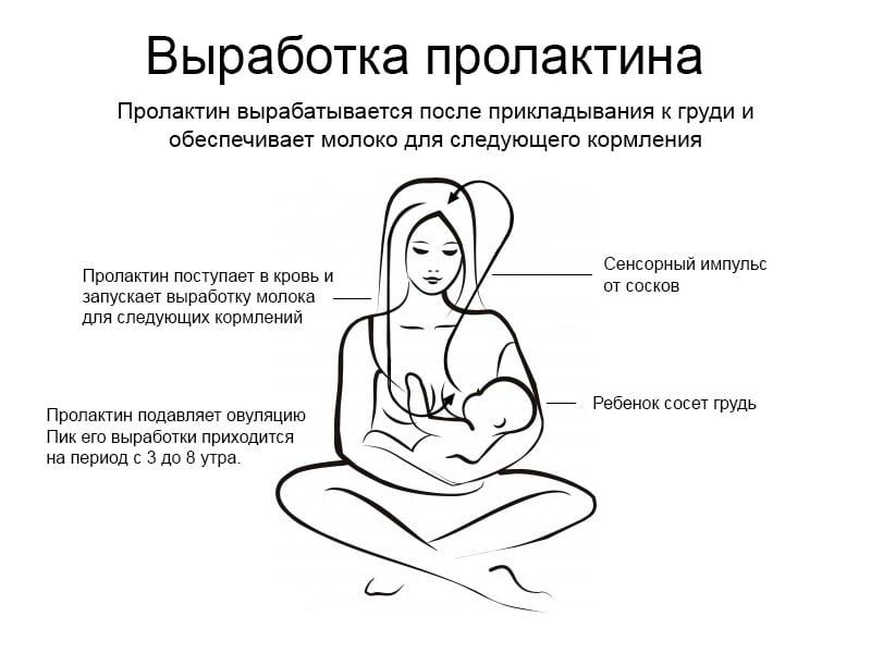 Выработка пролактина у женщин