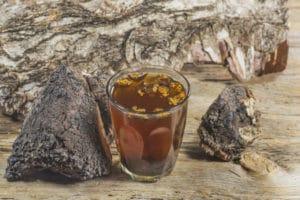 Чага: полезные свойства, применение и противопоказания, как заваривать и пить чагу