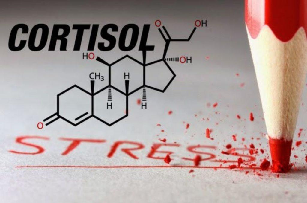 Гормон кортизол норма у женщин таблица