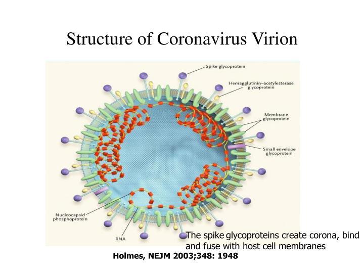 Структура коронавируса