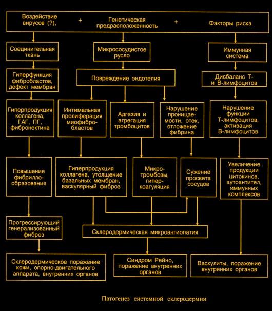 Патогенез склеродермии