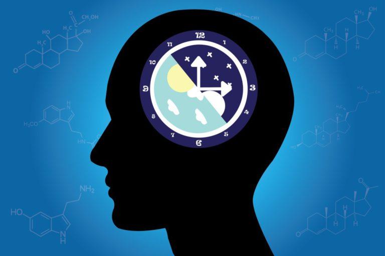 Мелатонин — гормон сна, регулирующий циркадные ритмы