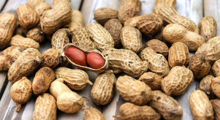 Арахис: польза земляного ореха