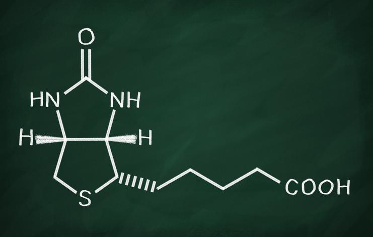 Биотин — витамин H и B7
