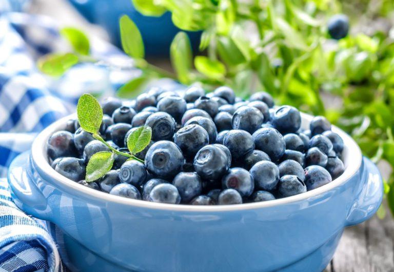 Голубика: польза ягоды листопадного кустарника