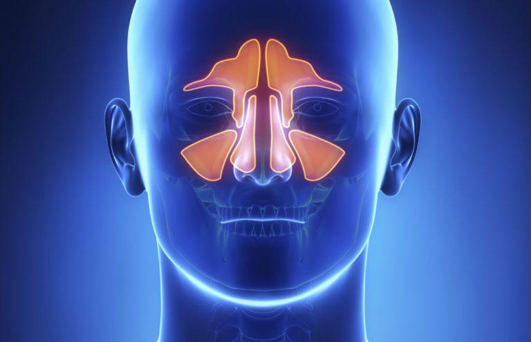 МРТ придаточных пазух носа: где сделать по доступной стоимости